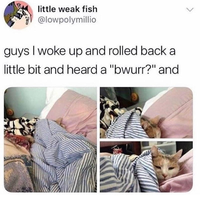 """Furniture - little weak fish @lowpolymillio guys I woke up and rolled back a little bit and heard a """"bwurr?"""" and <>"""