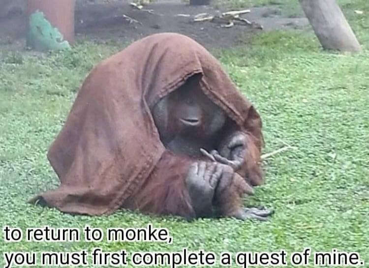Primate - to return to monke, you must first- complete a quest of mine.
