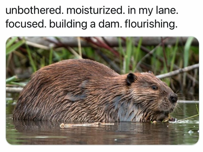 Water - unbothered. moisturized. in my lane. focused. building a dam. flourishing.