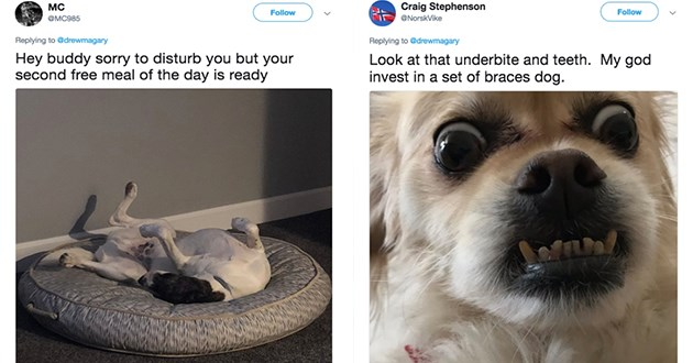 funny dogs tweets lol