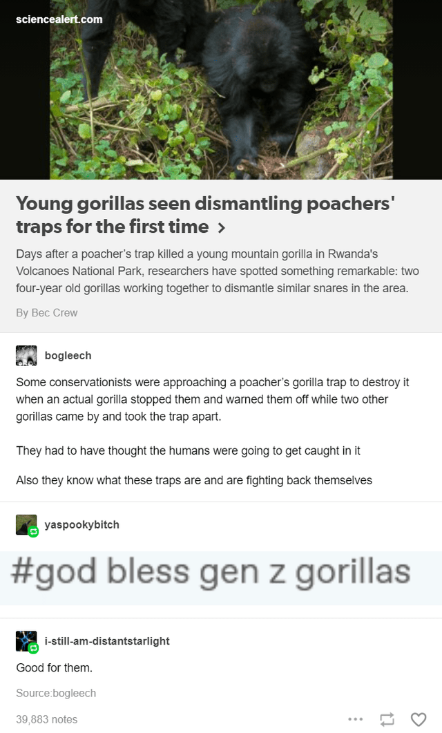 Plant - sciencealert.com Young gorillas seen dismantling poachers' traps for the first time > Days after a poacher's trap killed a young mountain gorilla in Rwanda's Volcanoes National Park, researchers have spotted something remarkable: two four-year old gorillas working together to dismantle similar snares in the area. Вy Вес Crew bogleech Some conservationists were approaching a poacher's gorilla trap to destroy it when an actual gorilla stopped them and warned them off while two other gorill