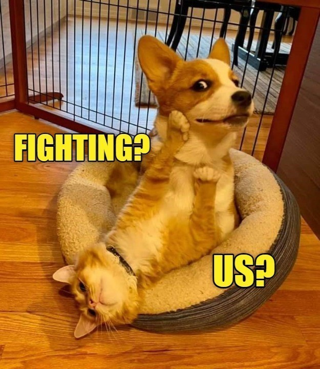 dog memes cat memes - 9620260608