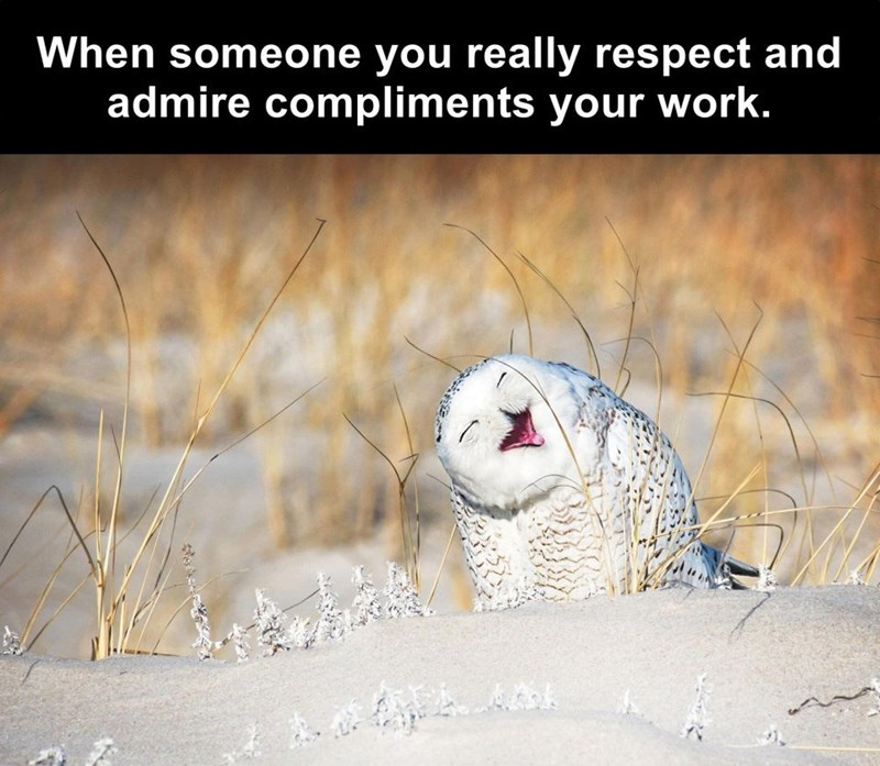 Roar - When someone you really respect and admire compliments your work.