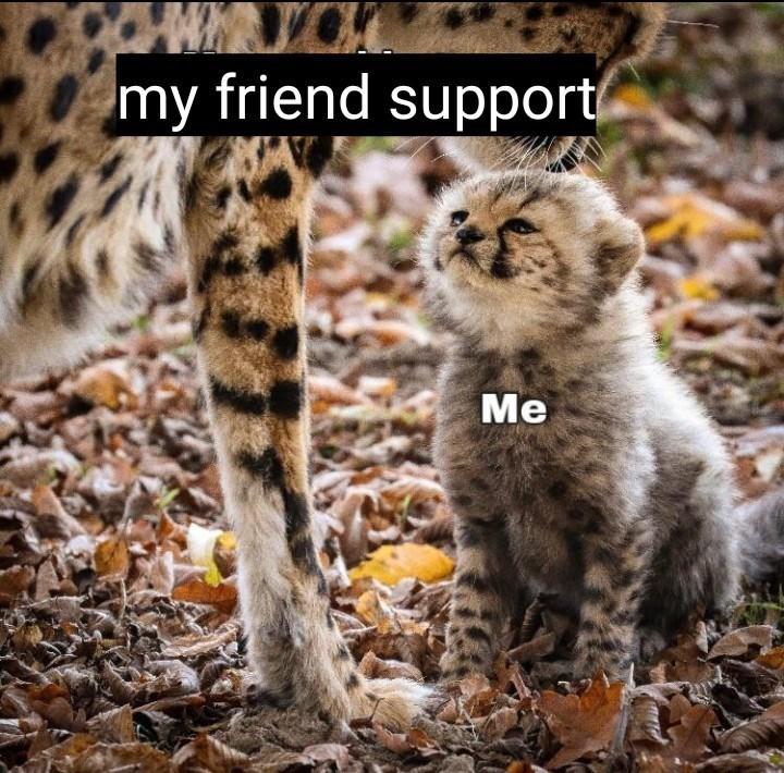 Cat - my friend support Me