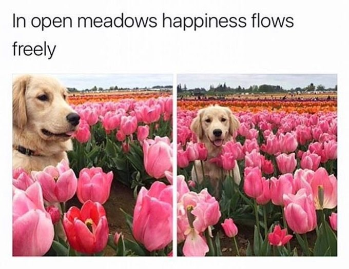 Flower - In open meadows happiness flows freely