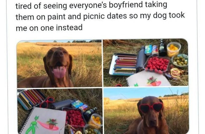 Photograph - tired of seeing everyone's boyfriend taking them on paint and picnic dates so my dog took me on one instead