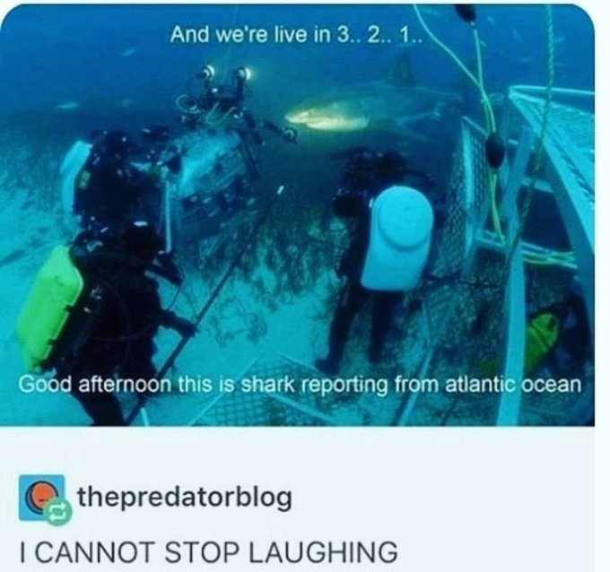 Underwater diving - And we're live in 3.. 2.. 1.. Good afternoon this is shark reporting from atlantic ocean thepredatorblog I CANNOT STOP LAUGHING