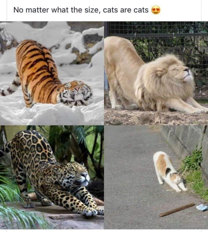 Photograph - No matter what the size, cats are cats