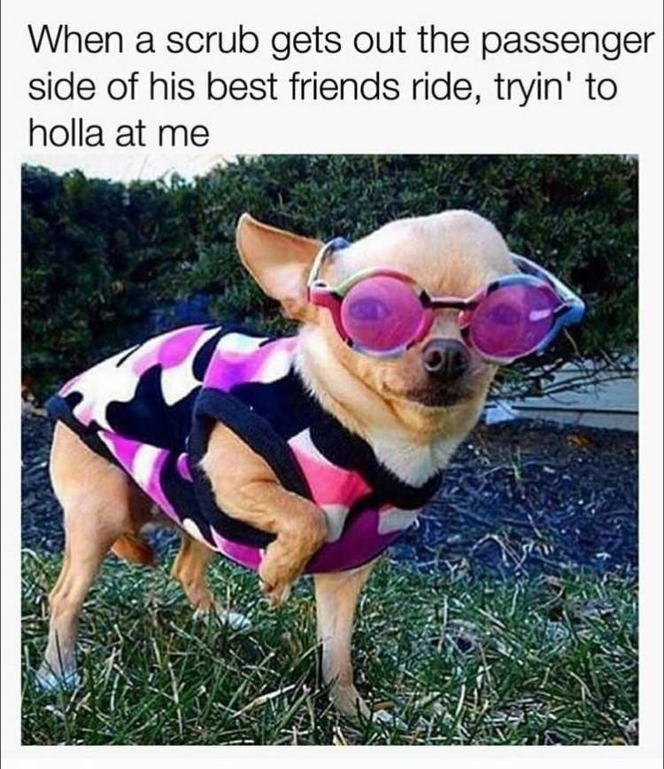 Dog - When a scrub gets out the passenger side of his best friends ride, tryin' to holla at me