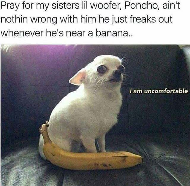 Cat - Pray for my sisters lil woofer, Poncho, ain't nothin wrong with him he just freaks out whenever he's near a banana.. i am uncomfortable