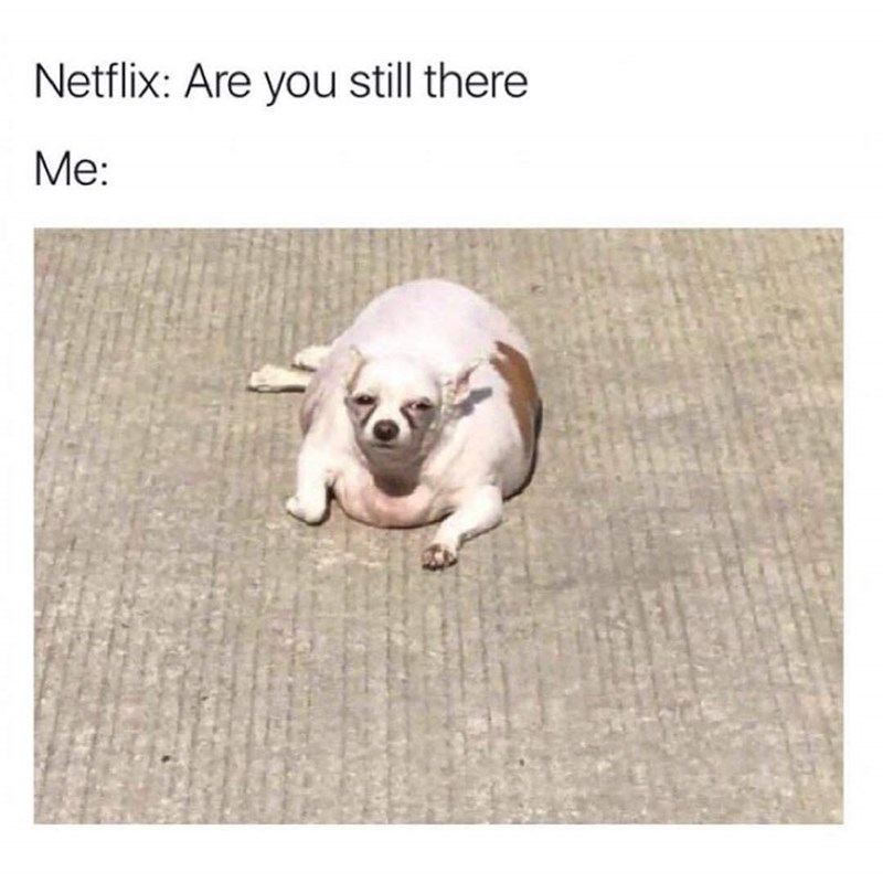 Dog - Netflix: Are you still there Ме: