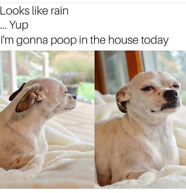 Dog - Looks like rain .. Yup I'm gonna poop in the house today