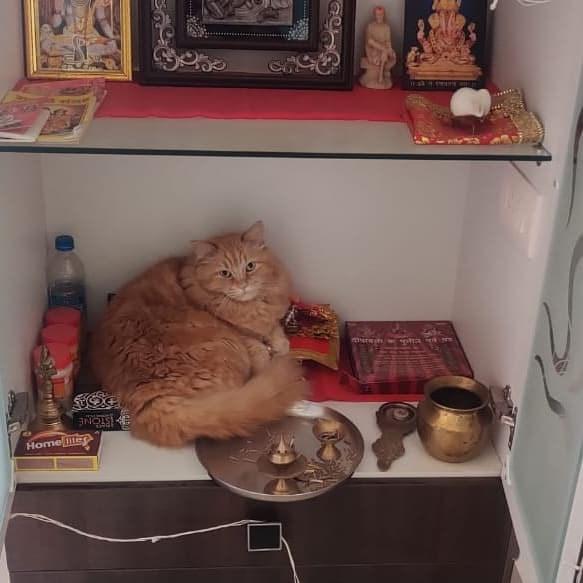 Cat - Home le ISTONE