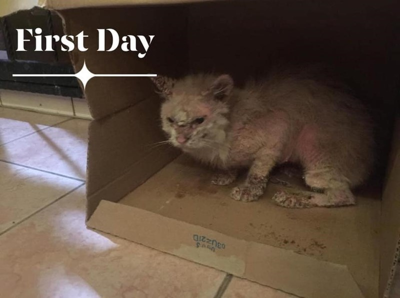 Cat - First Day