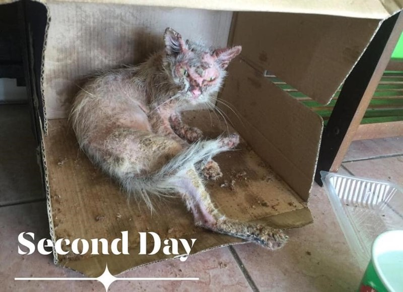 Cat - Second Day
