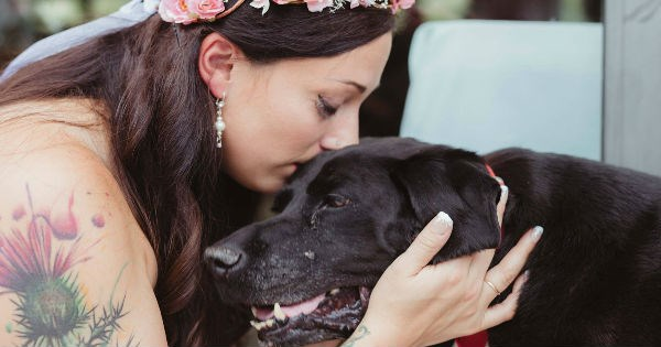 Sad dogs labrador photography wedding sweet tears