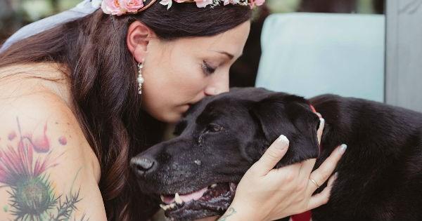 Sad dogs labrador photography wedding sweet tears - 962053