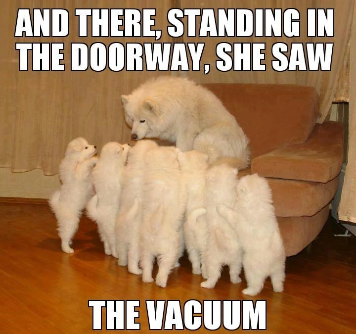Dog breed - AND THERE, STANDING IN THE DOORWAY, SHE SAW THE VACUUM