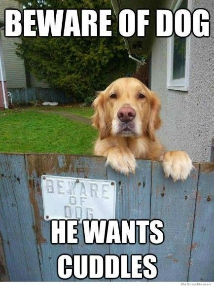 Dog - BEWARE OF DOG BEYARE OF HE WANTS CUDDLES WeknowMemes