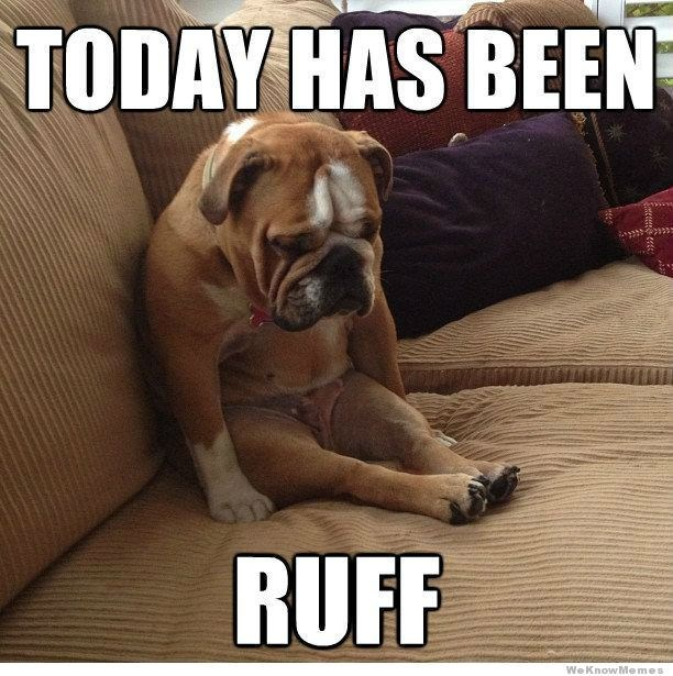Dog - TODAY HAS BEEN RUFF We KnowMemes