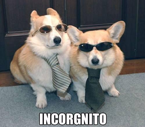 Dog - INCORGNITO