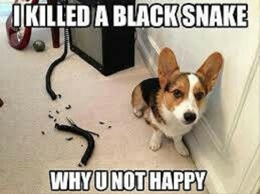 Dog - OKILLED A BLACK SNAKE WHY UNOT HAPPY