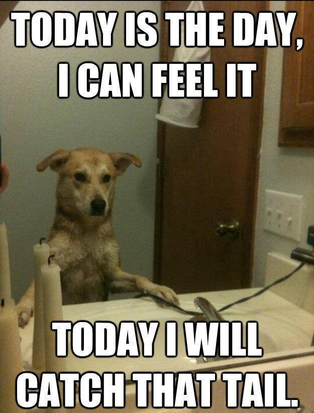 Dog - TODAY IS THE DAY, I CAN FEEL IT TODAYI WILL CATCH THAT TAIL.
