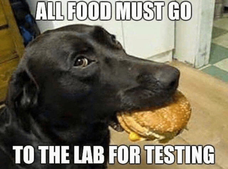 Dog - ALL FOOD MUST GO TO THE LAB FOR TESTING