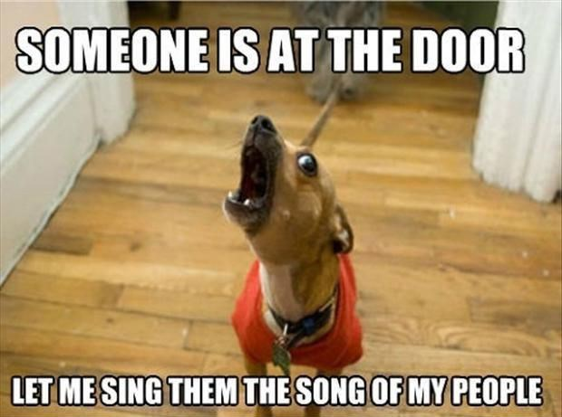 Dog - SOMEONE IS AT THE DOOR LET ME SING THEM THE SONG OF MY PEOPLE