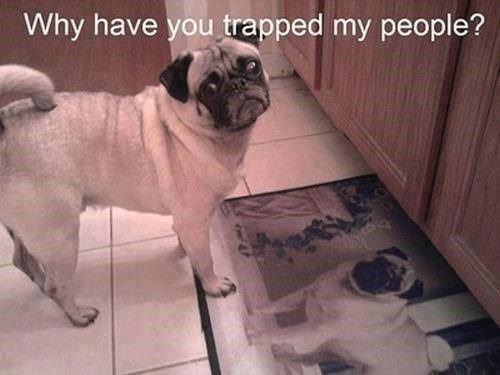 Pug - Why have you trapped my people?