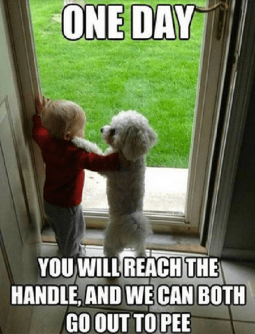 Dog - ONE DAY YOU WILL REACH THE HANDLE, AND WE CAN BOTH GO OUT TO PEE