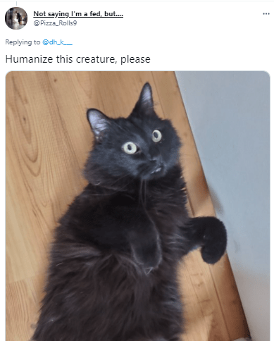 Cat - Not saying I'm a fed, but. @ Pizza_Rolls9 Replying to @dhk Humanize this creature, please