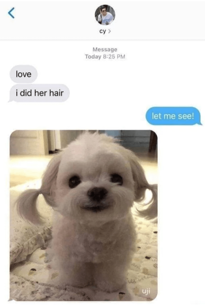 Dog - cy > Message Today 8:25 PM love i did her hair let me see! uji