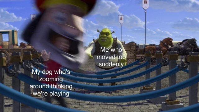 Cloud - Me who moved too suddenly My dog who's zooming around thinking we're playing