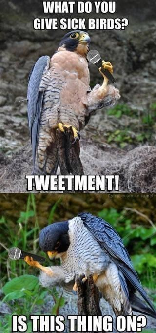 Bird - WHAT DO YOU GIVE SICK BIRDS? TWEETMENT! yingicotmman.tumble IS THIS THING ON?