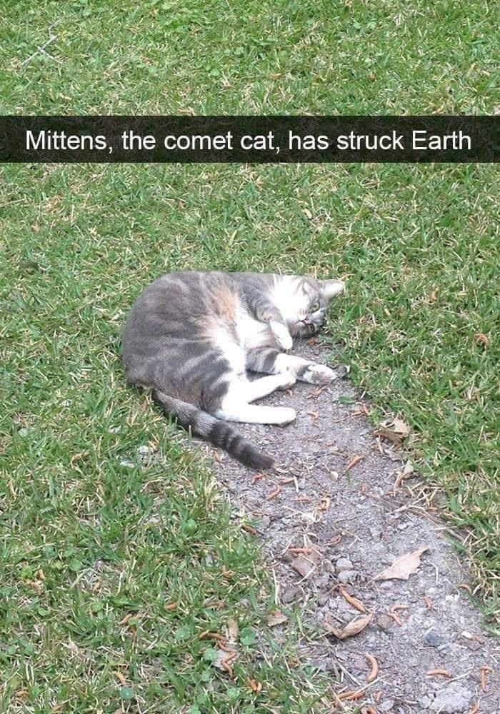 Cat - Mittens, the comet cat, has struck Earth