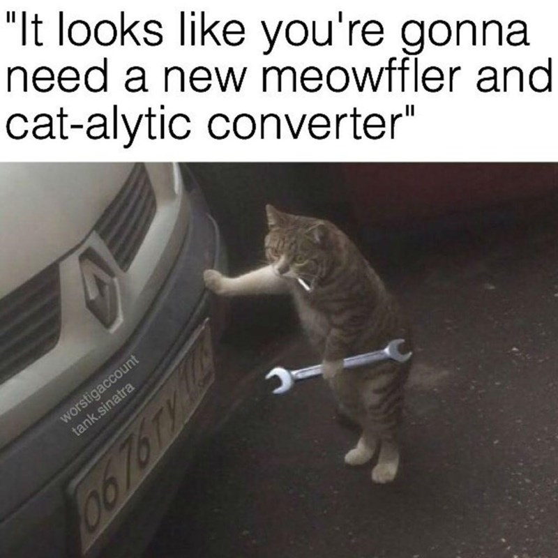 """Vehicle registration plate - """"It looks like you're gonna need a new meowffler and cat-alytic converter"""" worstigaccount tank.sinatra 0676TY1"""