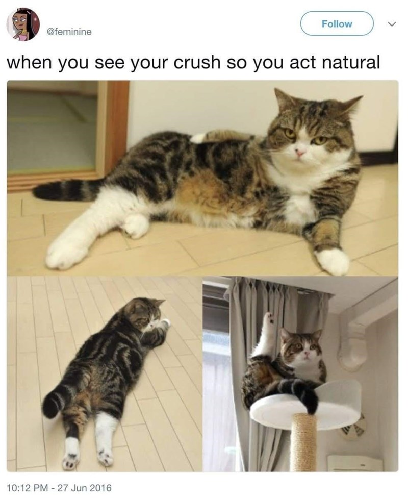 Cat - Follow @feminine when you see your crush so you act natural 10:12 PM - 27 Jun 2016