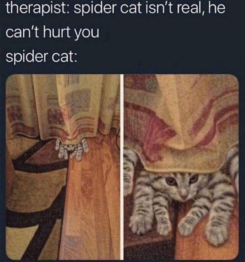 Photograph - therapist: spider cat isn't real, he can't hurt you spider cat: 162