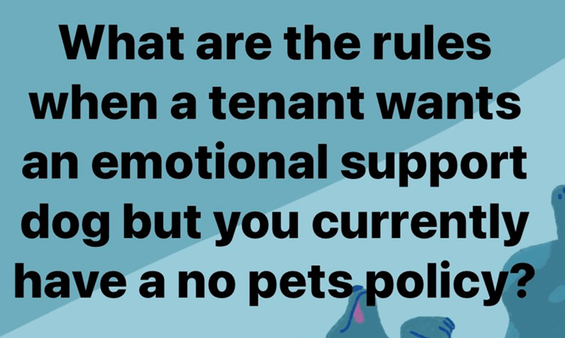 Gesture - What are the rules when a tenant wants an emotional support dog but you currently have a no pets policy?