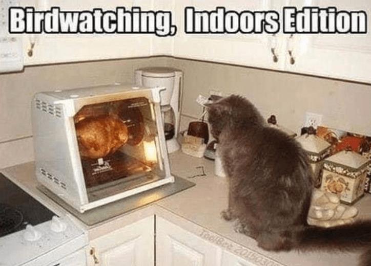 Mammal - Birdwatching, Indoors Edition ToolBee 201503