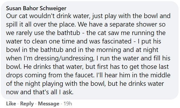 Font - Susan Bahor Schweiger Our cat wouldn't drink water, just play with the bowl and spill it all over the place. We have a separate shower so we rarely use the bathtub - the cat saw me running the water to clean one time and was fascinated - I put his bowl in the bathtub and in the morning and at night when I'm dressing/undressing, I run the water and fill his bowl. He drinks that water, but first has to get those last drops coming from the faucet. I'll hear him in the middle of the night pla