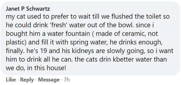 Font - Janet P Schwartz my cat used to prefer to wait till we flushed the toilet so he could drink 'fresh' water out of the bowl. since i bought him a water fountain ( made of ceramic, not plastic) and fill it with spring water, he drinks enough, finally. he's 19 and his kidneys are slowly going, so i want him to drink all he can. the cats drin kbetter water than we do, in this house! Like · Reply · Message 7h