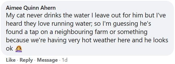 Rectangle - Aimee Quinn Ahern My cat never drinks the water I leave out for him but l've heard they love running water; so l'm guessing he's found a tap on a neighbouring farm or something because we're having very hot weather here and he looks ok Like · Reply · Message 1d