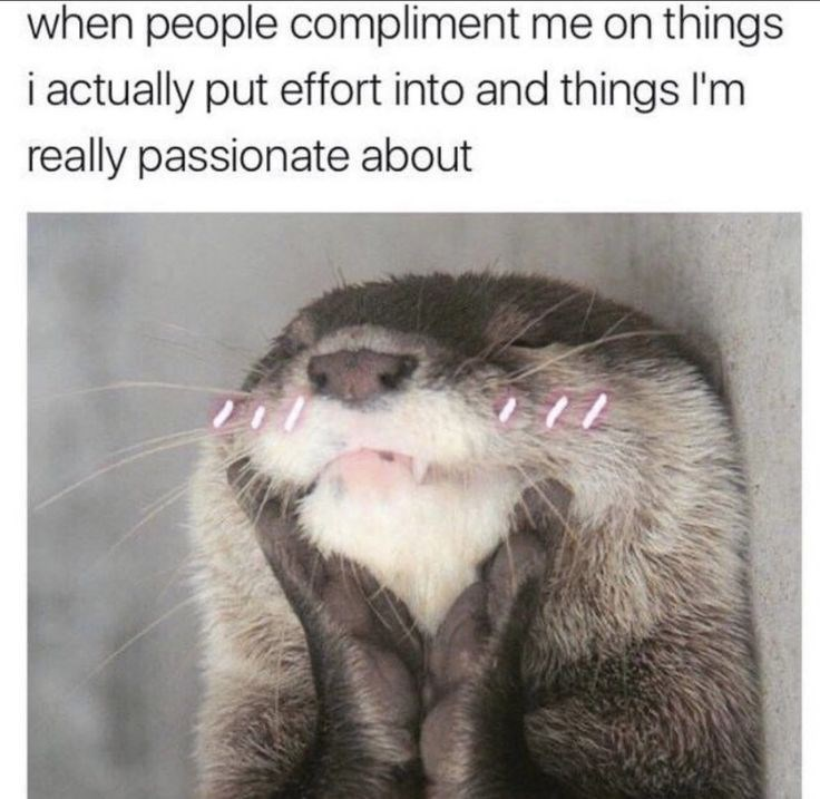 Cat - when people compliment me on things i actually put effort into and things I'm really passionate about