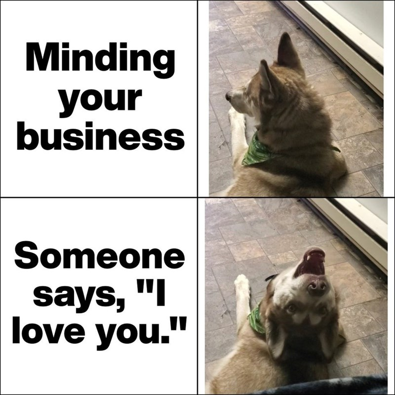 """Cat - Minding your business Someone says, """"I love you."""""""