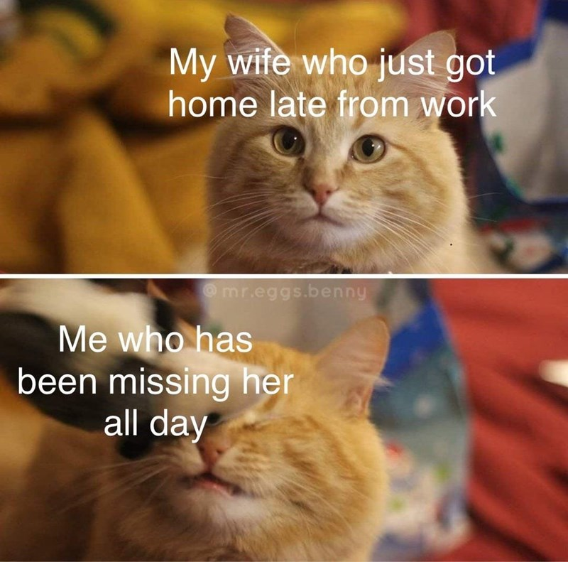 Cat - My wife who just got home late from work Omr.eggs.benny Me who has been missing her all day