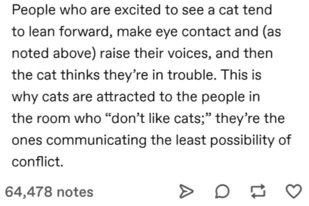 """Font - People who are excited to see a cat tend to lean forward, make eye contact and (as noted above) raise their voices, and then the cat thinks they're in trouble. This is why cats are attracted to the people in the room who """"don't like cats;"""" they're the ones communicating the least possibility of conflict. 64,478 notes"""