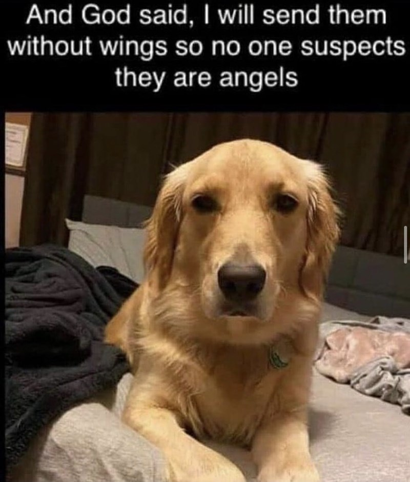 Dog - And God said, I will send them without wings so no one suspects they are angels