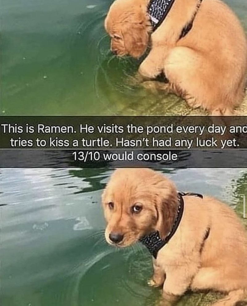Water - This is Ramen. He visits the pond every day and tries to kiss a turtle. Hasn't had any luck yet. 13/10 would console
